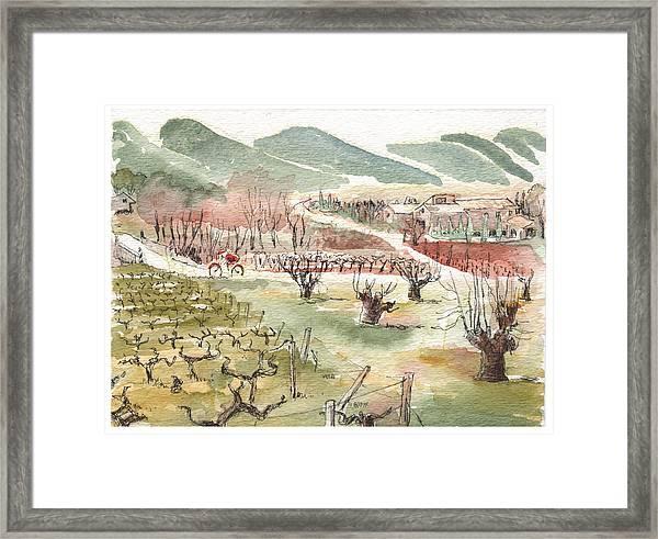 Bicycling Through Vineyards Framed Print