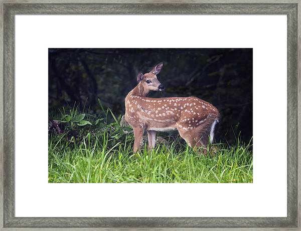 Big Bambi Framed Print