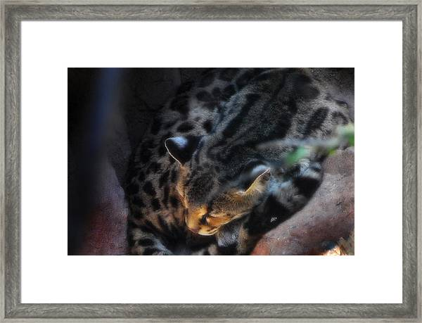 Big Cat Framed Print