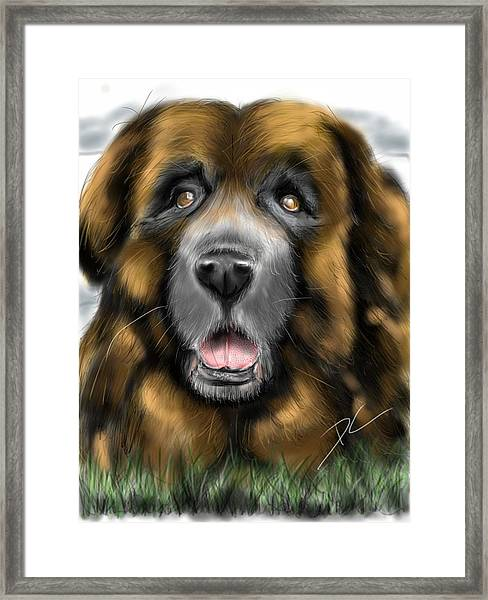 Big Dog Framed Print