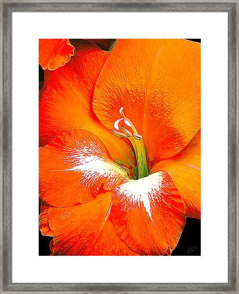 Big Glad In Bright Orange Framed Print