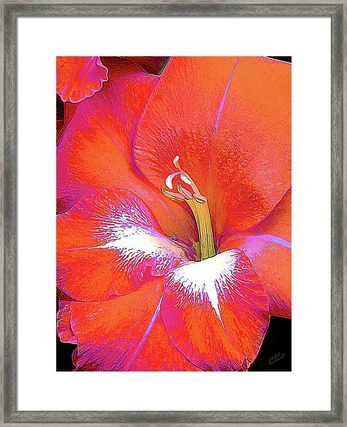Big Glad In Orange And Fuchsia Framed Print