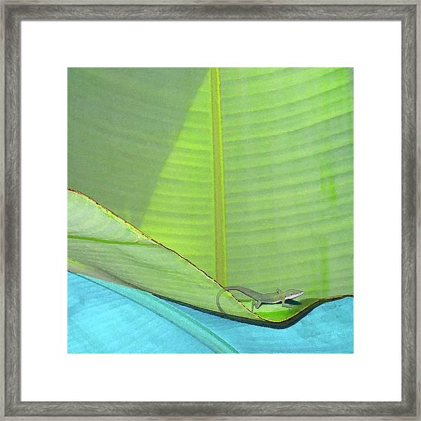 Big Leaves With Lizard Framed Print
