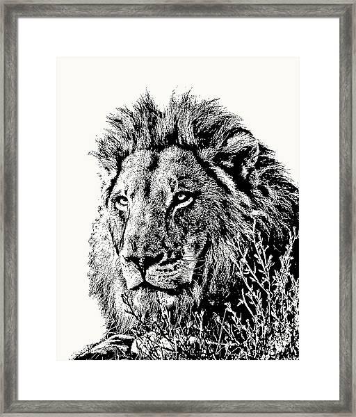 Big Male Lion Portrait Framed Print