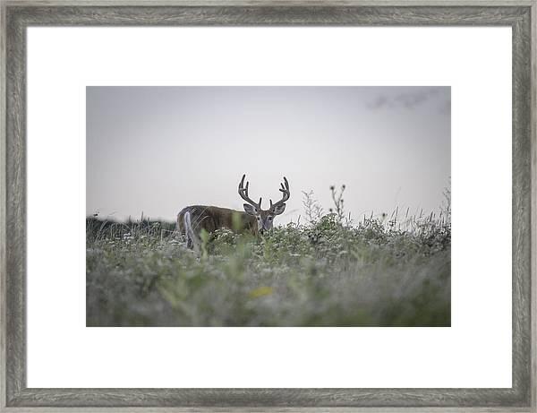 Big Meadow Deer Framed Print by Michael Donahue
