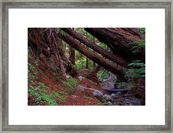 Big Sur Redwood Canyon Framed Print