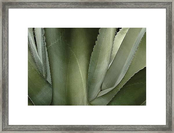 Big Sur Succulent Framed Print