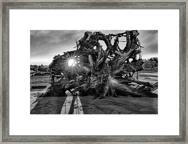 Big Tree On The Beach At Sunrise In Monochrome Framed Print