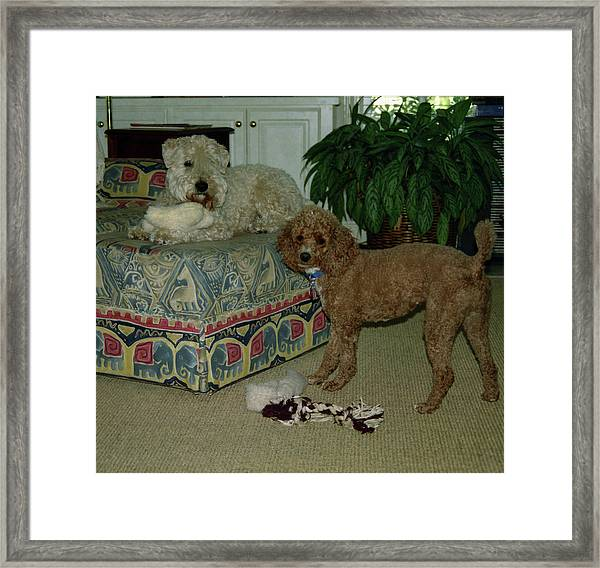 Framed Print featuring the photograph Binkley And  Ginger by Samuel M Purvis III