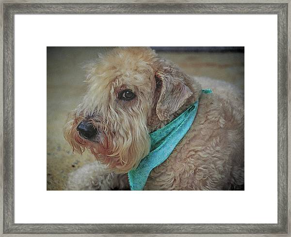 Binkley Framed Print