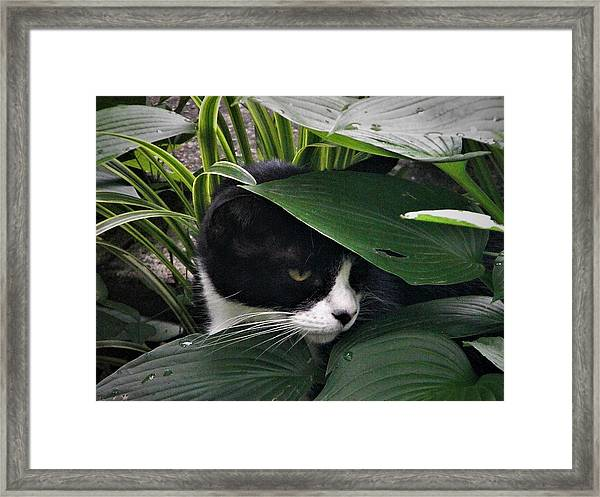 Binx Our Feral Cat Framed Print