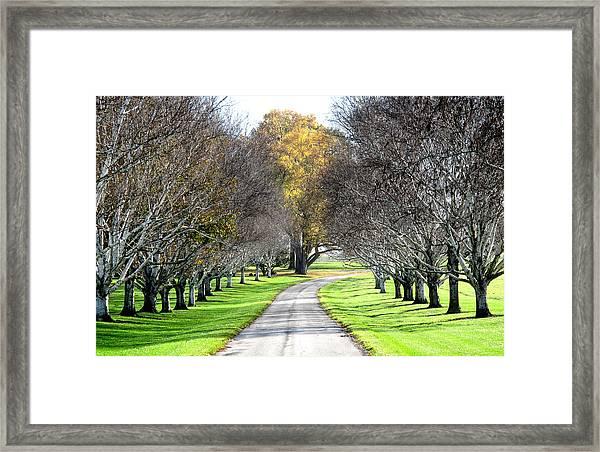 Birch Aley Framed Print
