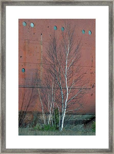 Birch And Ship Framed Print