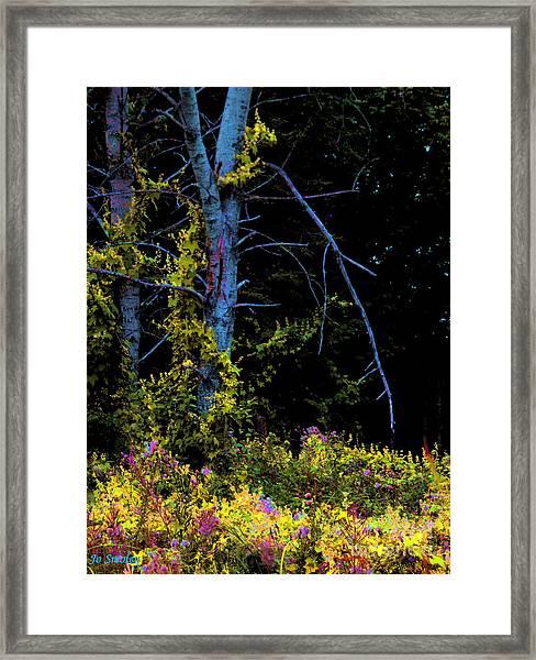 Birch And Vines Framed Print