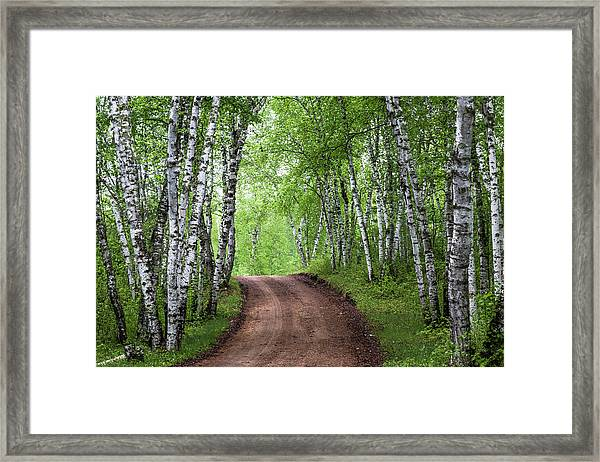 Framed Print featuring the photograph Birch Tree Forest Path #3 by Patti Deters