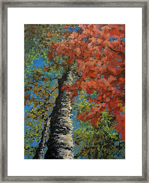 Birch Tree - Minister's Island Framed Print