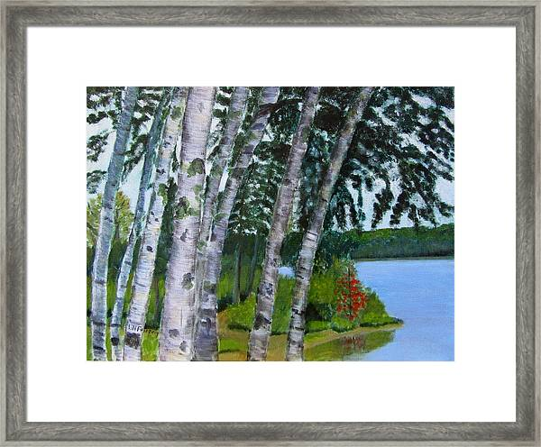 Birches At First Connecticut Lake Framed Print