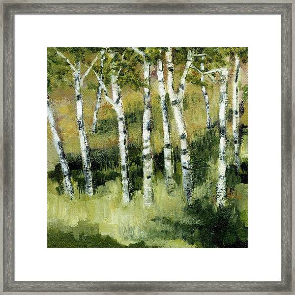 Birches On A Hill Framed Print