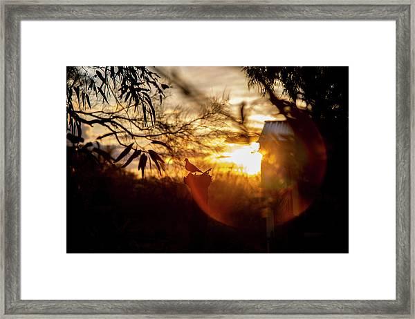 Bird At Sunset Color Framed Print
