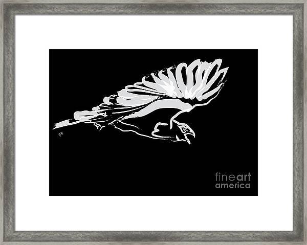 Bird Buzzard  Framed Print