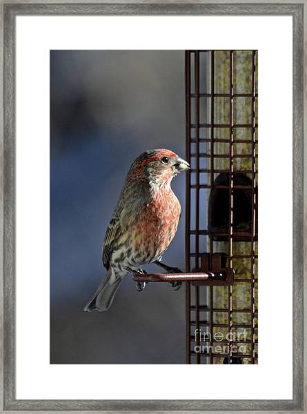 Bird Feeding In The Afternoon Sun Framed Print