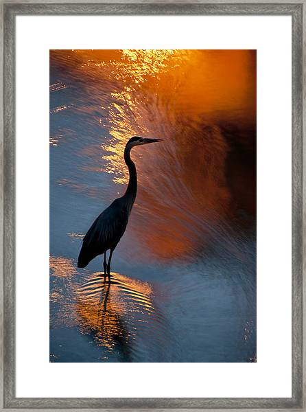 Bird Fishing At Sundown Framed Print by Williams-Cairns Photography LLC