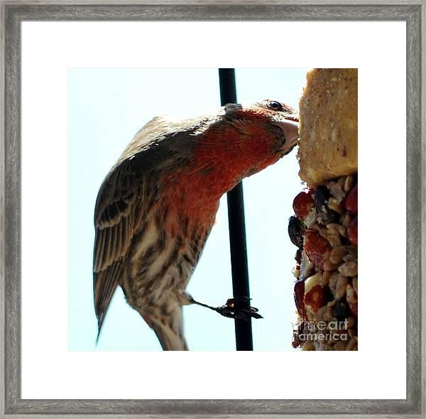 Bird Hits The Jackpot Framed Print