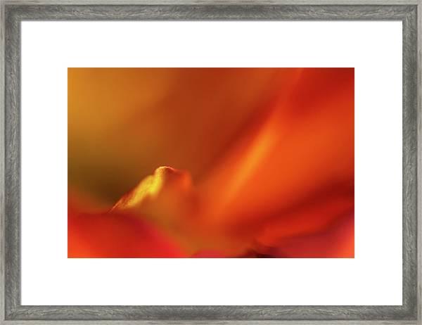 Bird In A Mum Framed Print
