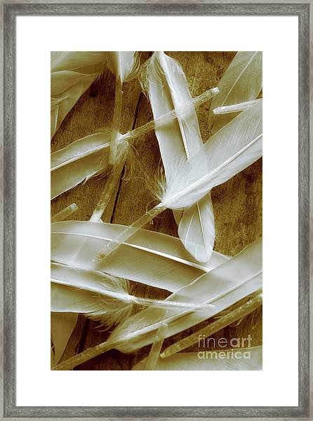 Bird-less Of A Feather Framed Print