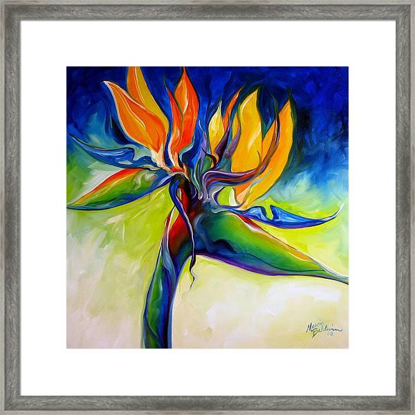Bird Of Paradise 24 Framed Print