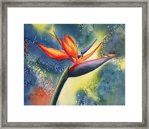 Bird Of Paradise Flower Framed Print