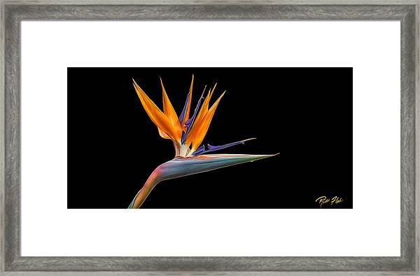 Bird Of Paradise Flower On Black Framed Print