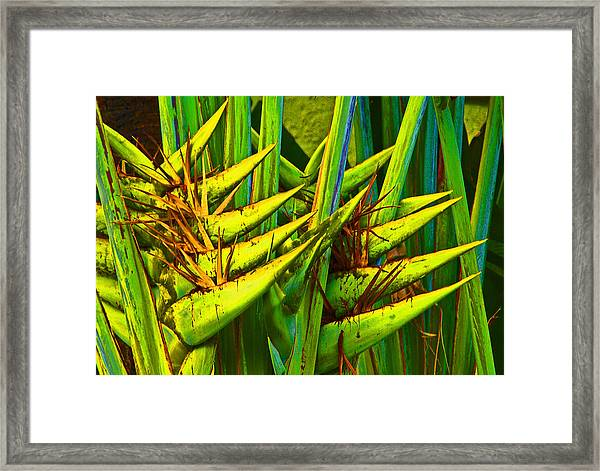 Bird Of Paridise Framed Print