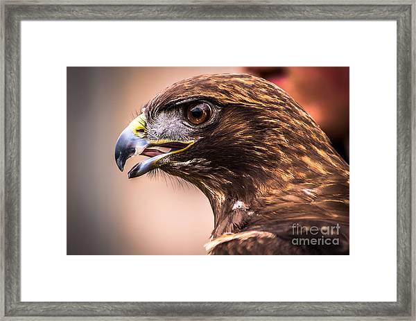 Bird Of Prey Profile Framed Print