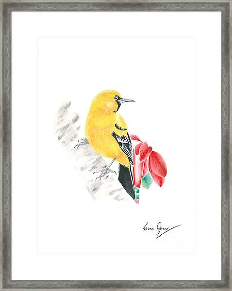 Bird In Yellow Framed Print