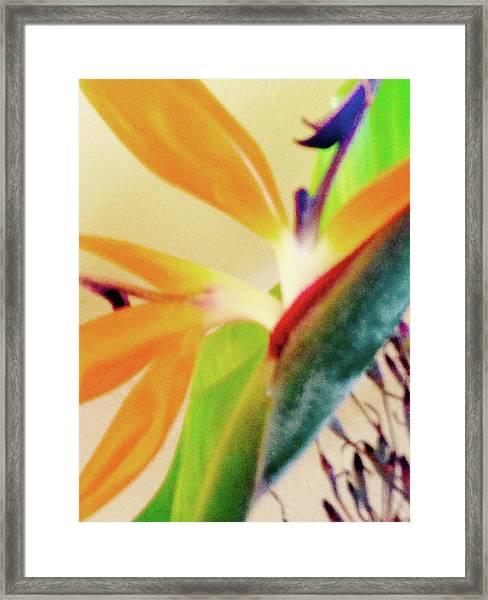 Birds Bromeliads Halyconia 2 Framed Print