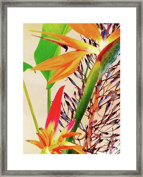 Birds Bromeliads Halyconia Framed Print