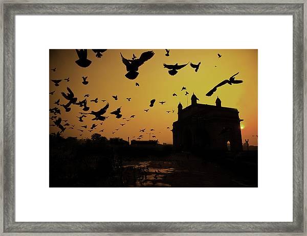 Birds In Flight At Gateway Of India Framed Print by Photograph by Jayati Saha