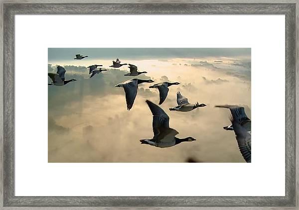 Birds In Flight Framed Print