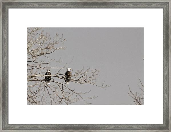 Birds Of A Feather Framed Print