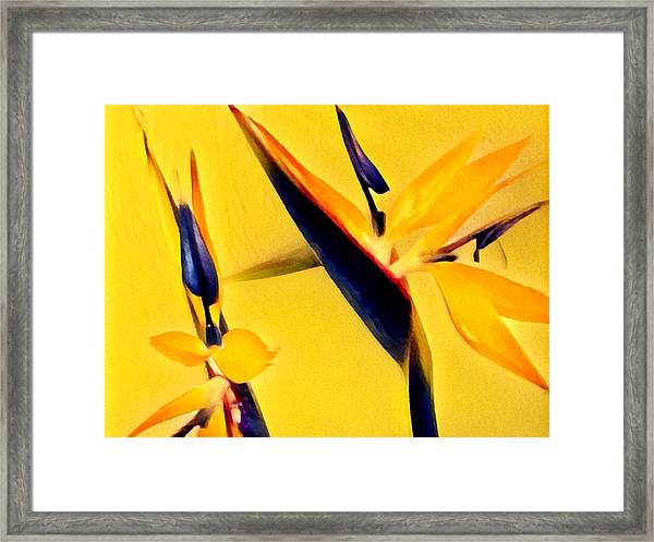 Birds Of Paradise - Two In Gold Framed Print