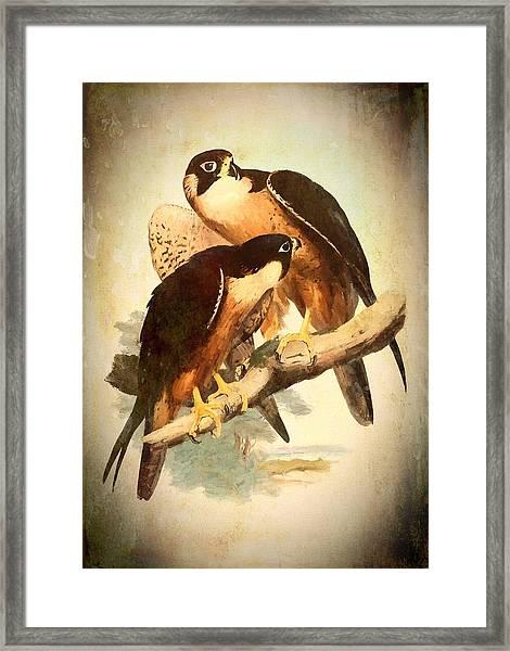 Birds Of Prey 2 Framed Print