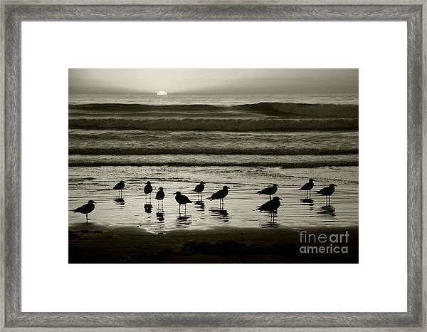 Birds On A Beach Framed Print