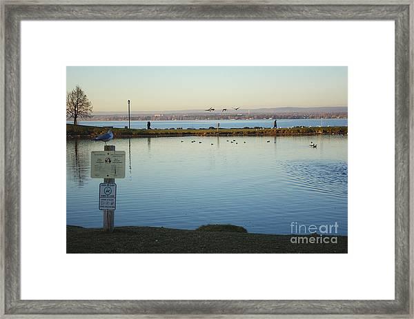 Birds On The Ottawa River Framed Print