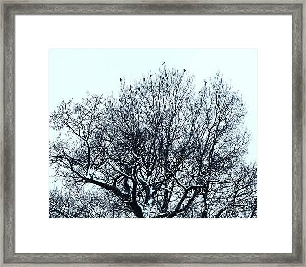 Birds On The Tree Monochrome Framed Print