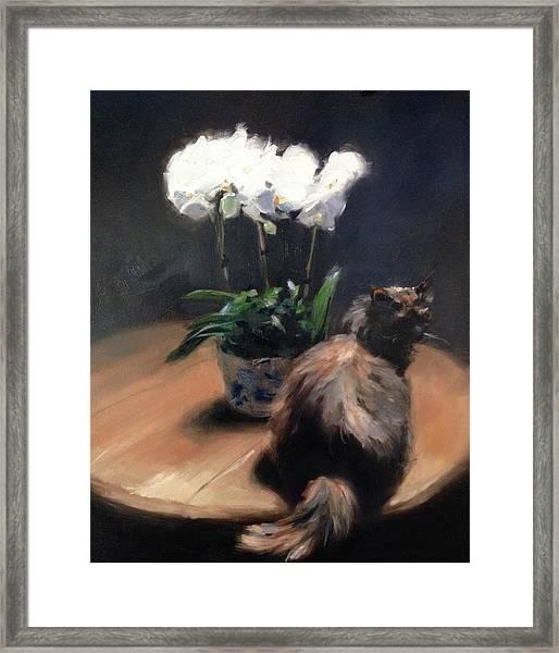 Birthday Orchids Framed Print