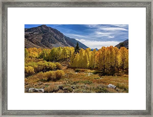 Bishop Creek Aspen Framed Print