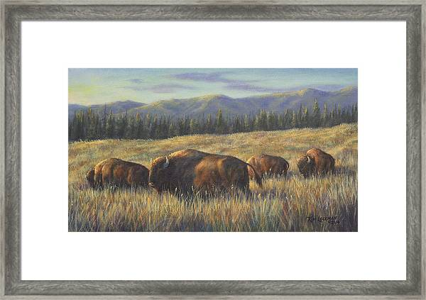 Bison Bliss Framed Print