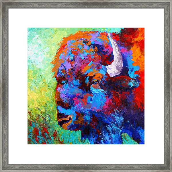 Bison Head II Framed Print