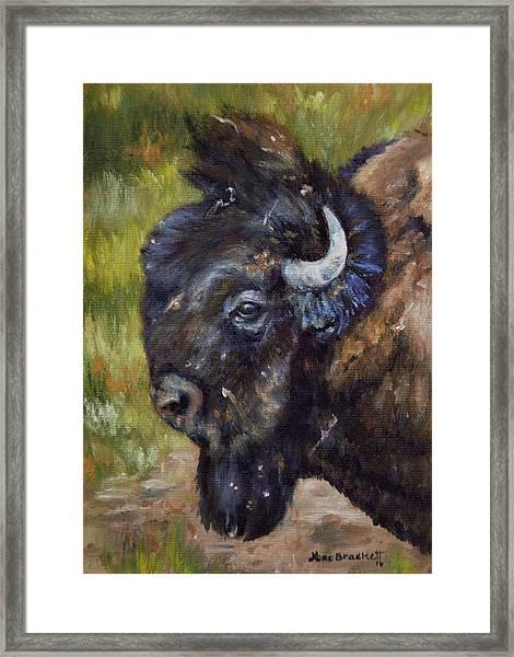 Bison Study 5 Framed Print